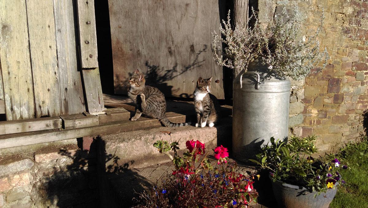 gallery-outside-kittens